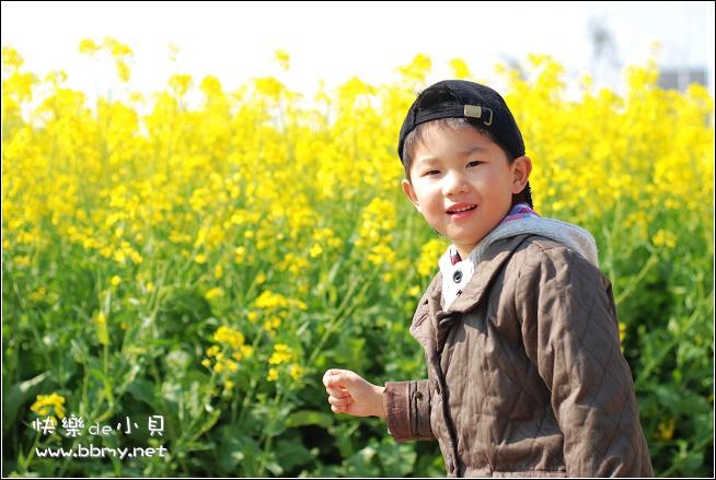 金东浩油菜花照片
