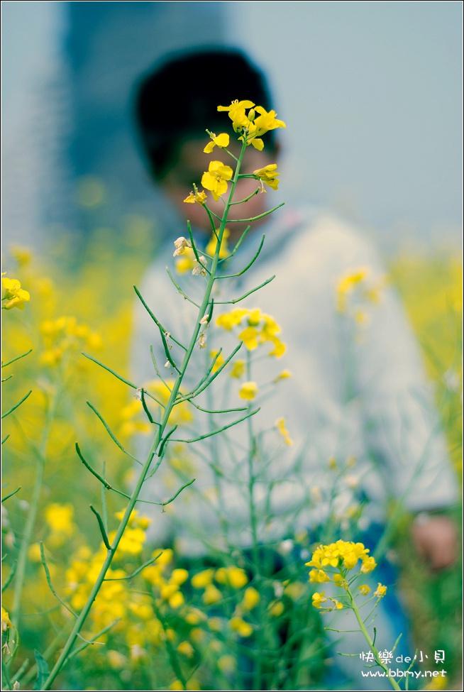 金东浩游新海公园之油菜花照片
