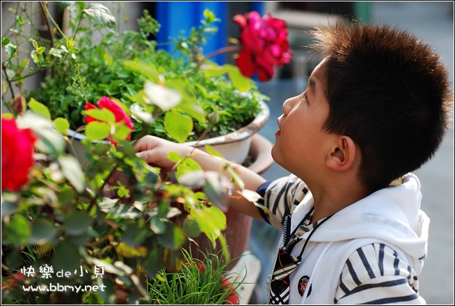 金东浩早晨浇花照片