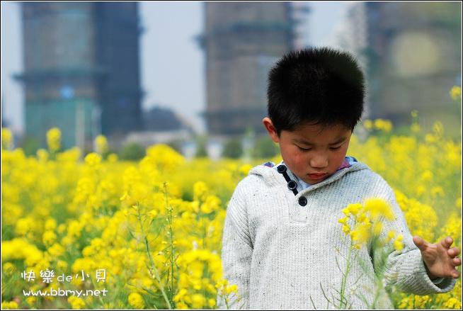 金东浩游新海公园之油菜花日记照片