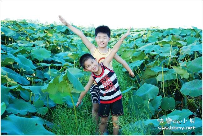 金东浩赏荷花节日记照片